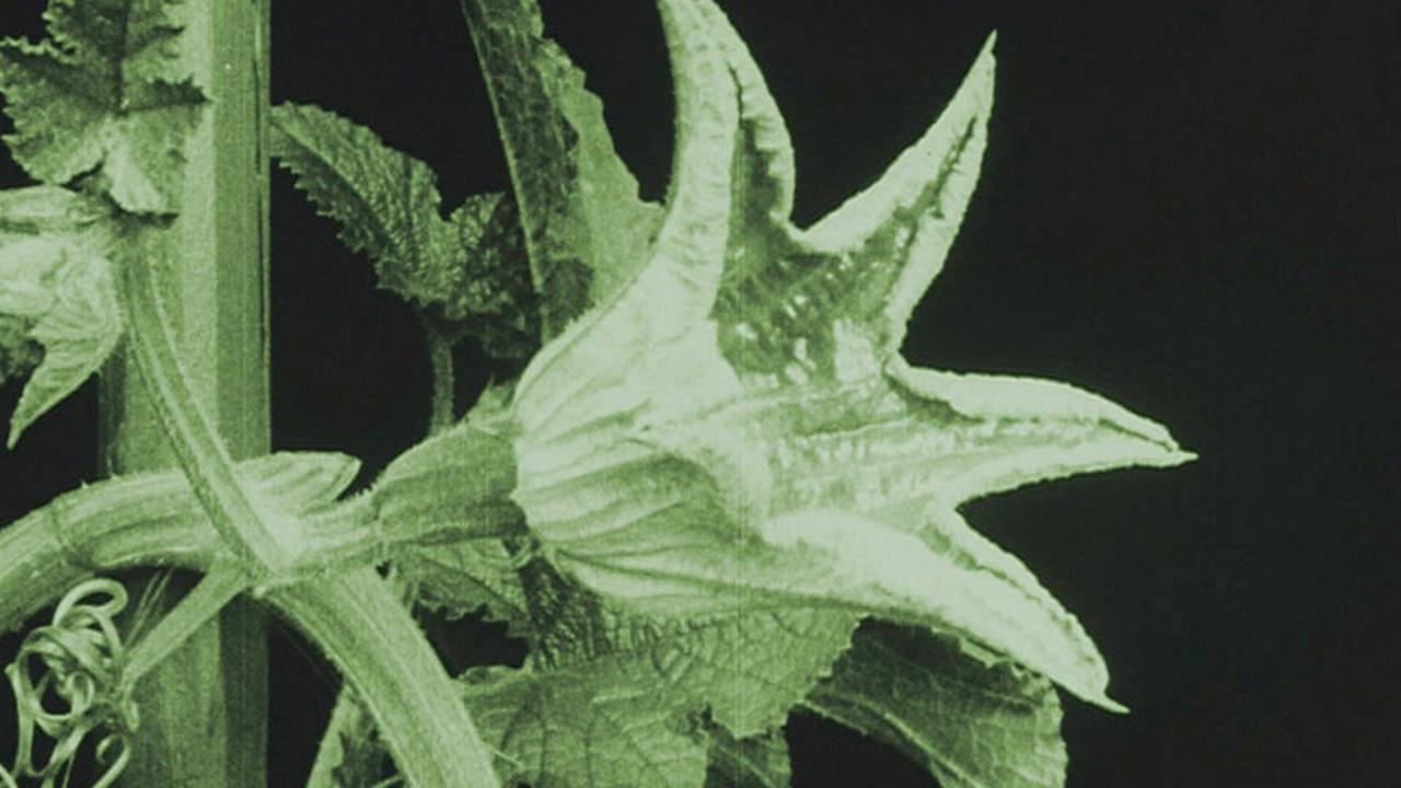 Image du film Das Blumenwunder